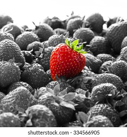 Business Advertising - Stand Out. Original. Different - for branding and advertising - Business concept with bright red strawberry against many other black and white strawberries.