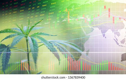 Business cannabis stock leaves marijuana success market price green profit growth charts graph money display screen up industry trend grow higher quickly /  Commercial cannabis medicine money higher