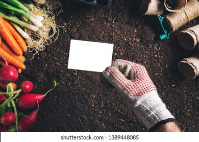 Business card mock up for organic homegrown produce cultivation, male gardener holding card over harvested vegetable and gardening equipment