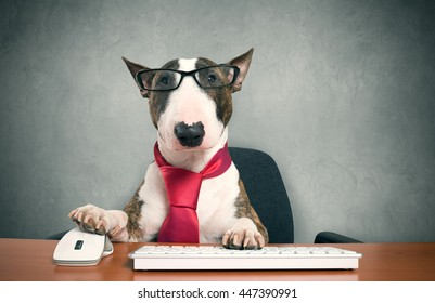 Business dog using his computer
