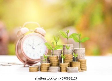 Business Finance and Money concept, Money coin stack growing graph with green bokeh background,Trees growing on coin