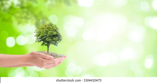 Business Growing Concept : Plant tree growing thru from pile of coins in woman hand with green natural and bokeh light in background.