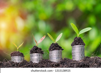 Business growth concept. Financial growth is the business sector needs. The coin stacked above the tree is growing. The continued expansion of investment sector.