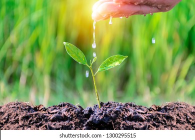 Business Growth concept.Continued of investment and profitability.The hands that are watering sapling,In order to grow into a big tree with self-care capabilities,Stable growth.Stability is tangible.