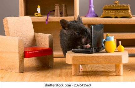 Business hamster check your E'mail on a laptop/Business hamster