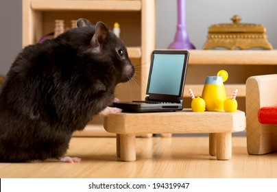 Business hamster in his room on his laptop checking his e-mails / Business hamster