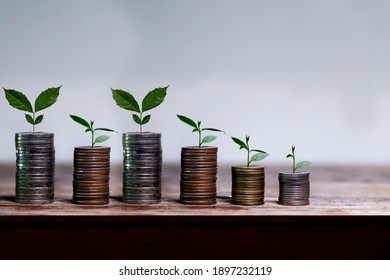 Business investment growth concept. Stock of coins with small trees on wood bar, Saving money.