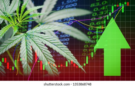 Business marijuana leaves cannabis stock success market price green arrow up profit growth charts graph money display screen up industry trend grow higher quickly / Commercial cannabis medicine money