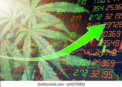 Business marijuana leaves cannabis stock success market price green arrow up industry trend grow higher quickly. The concept of a company or stock market of marijuana exports for medical use