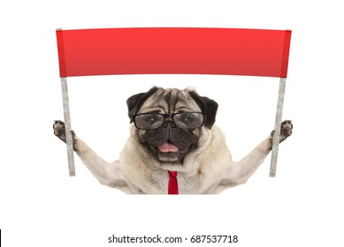 business pug dog with tie and reading glasses, holding up red banner sign, isolated on white background