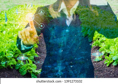 business woman use hands to touch the interface screen of agricultural icons, with background of organic farm, business concepts and agricultural technology for sustainable development.