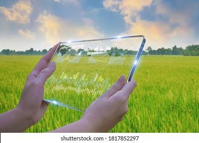 Geschäftsfrau, die intelligente Tablette nutzt, Produktionskontrolle für Reisfelder, Technologie zur Kontrolle landwirtschaftlicher Produkte, auf dem zukünftigen Markt der Landwirtschaft, Produktivitätsentwicklung, Satellit für die Landwirtschaft