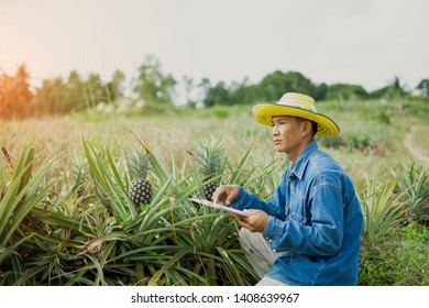 Businessman farmer holding tablet for checking in pineapple field. Smart farmer concept use technology internet and information for