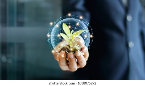 Businessman hand with coins and sprout in network connection. Plant growing on pile of coins money. Money growth concept.