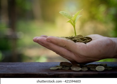 Businessman holding plant sprouting from a handful of gold coins