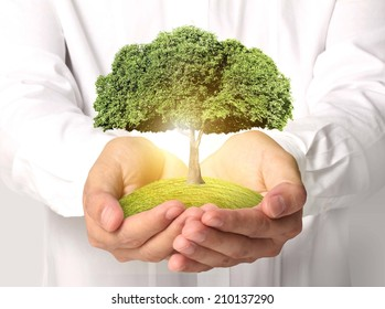 Businessman holding tree sprouting