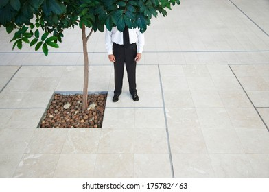 Businessman standing behind tree low section