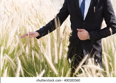 Businessman standing in a field and hand touching the tall grass.