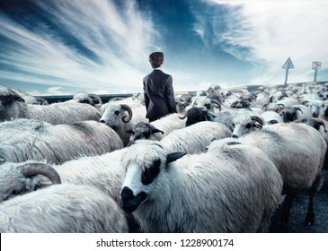 Businessman standing in the middle flock of sheep walking in opposite direction. Out of the box concept. Stand out from the crowd.