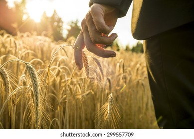 Businessman walking through a golden wheat field touching an ear of ripening wheat at sunset backlit by the golden sun. Conceptual of turning back to nature for inspiration, energy and peace of mind.