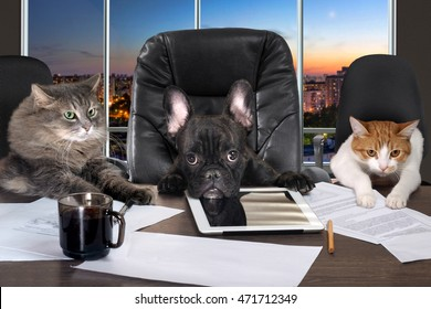 Businessmen in office. Dog head and cat - employees, managers. Different characters personality. The concept of career growth, business, humor, advice, pet products
