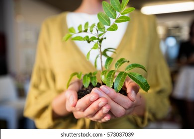Businesswoman holding plant in the office