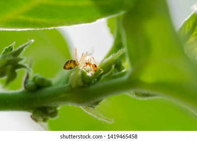 busy ants finding food to store in their colony