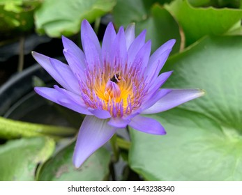 Lotus Earth Images, Stock Photos & Vectors | Shutterstock