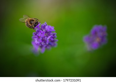 busy bee on a flower in spring