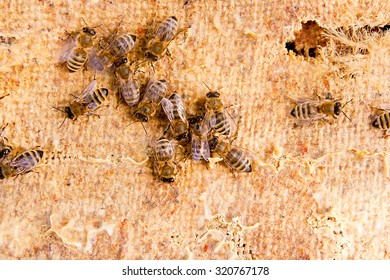 Busy bees, close up view of the working bees. Close up showing some animals on vintage background.