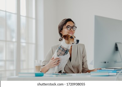Busy female teacher wears formal clothes and spectacles conducts online lessons for students works at computer poses in coworking space with dog, busy working online. Businesswoman at desktop