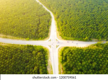 Busy Road junction in the middle of green palm plantation, view from aerial