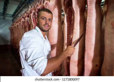 Butcher holding sharp knife by the pig carcass in slaughterhouse in refrigerator storage room. Meat industry and processing.