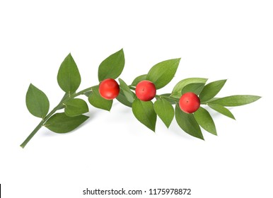 butcher's-broom with berries isolated on white background