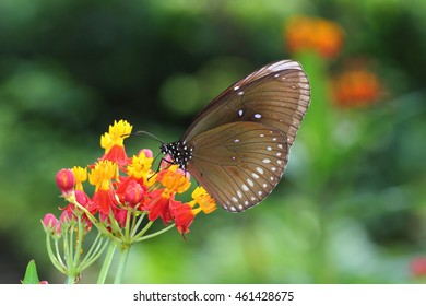 butter fly and flowers