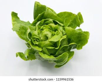 Butter head Lettuce, salad plant, vegetable leaves,