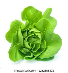 Butter head lettuce vegetable for salad on white back ground