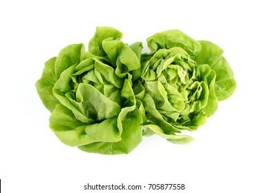 Butter Lettuce vegetable for salad on white back ground