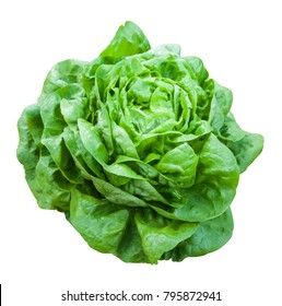 Butter Lettuce vegetable for salad on white background with clipping path.
