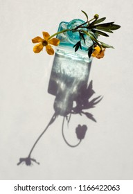Buttercup flower in a glass bottle with shadows isolated