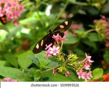 Butterflies at Audubon Butterfly Garden & Insectarium, New Orleans