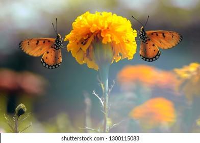 Butterflies, Butterfly, Wallpaper,