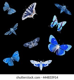 Butterflies colorful glowing silhouettes isolated on the black. Insects collection abstract background