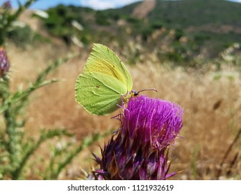 Butterflies in the countryside in Sardinia