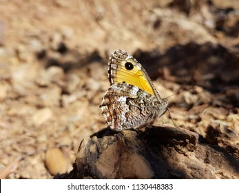 Butterflies in the countryside of Sardinia