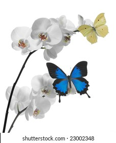 9d4384898 Butterfly Orchid Images, Stock Photos & Vectors | Shutterstock