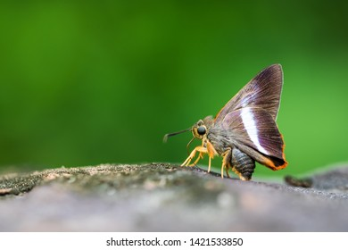 Butterflies are eating minerals that are fed from rocks in the morning.  On a green background