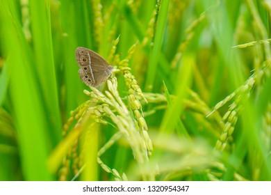 butterflies in the fields