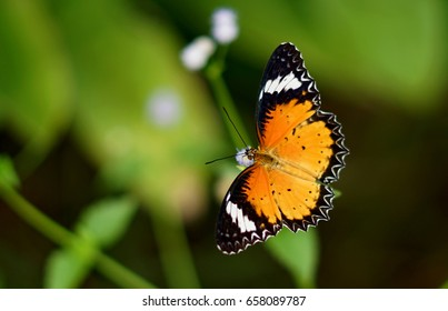 Butterflies and finding nectar in flowers