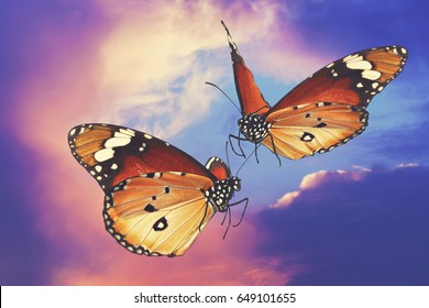Butterflies flight. Love forever. Migrating butterflies of Danaus chrysippus (Plain tiger or African monarch) against magic colorful sky